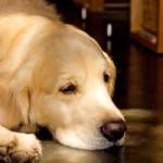 ImageButton 犬