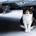 ImageButton 猫